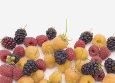 Free Raspberry Stock Photo - 10323620