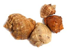 Free Sea Shell Over White Royalty Free Stock Image - 10323676
