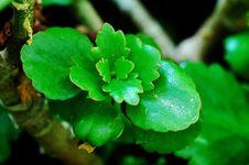 Free Begonia Stock Photo - 10323940