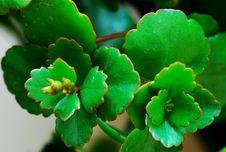 Free Begonia Royalty Free Stock Photo - 10323965