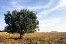 Free Tree Against Blue Sky Royalty Free Stock Photo - 10326135