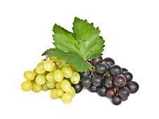 Free Grapevines Stock Images - 10326624