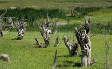 Free Dry Trees Stock Photos - 10326793