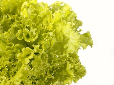 Free Fresh Raw Lettuce With Water Drops. Royalty Free Stock Photo - 10327865