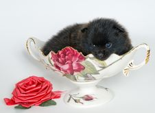 Free Puppy In A Vase Stock Photos - 10327903