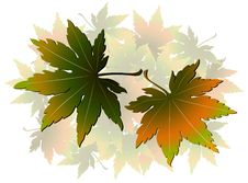 Free Maple Leaves Stock Images - 10329184