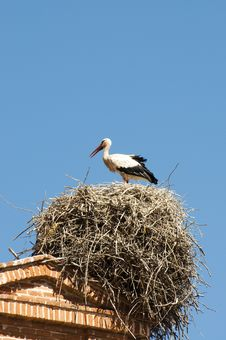Free Stork Royalty Free Stock Images - 10329509