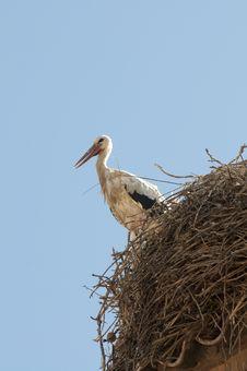 Free Stork Royalty Free Stock Photos - 10329588
