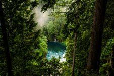 Free Conifer, Daylight, Evergreen, Fog Stock Images - 103273534
