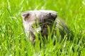 Free Little Kitten Stock Photography - 10335872