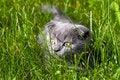 Free Little Kitten Royalty Free Stock Photography - 10335897