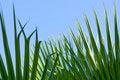 Free Green Palm Leaf Stock Photos - 10337223