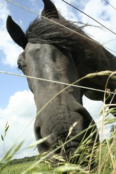 Free Friesian In Green II Royalty Free Stock Photo - 10330305