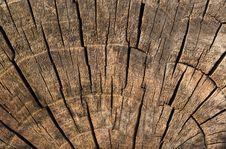 Free Old Log Texture Royalty Free Stock Images - 10332179