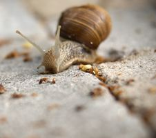 Free Garden Snail Royalty Free Stock Photos - 10333868