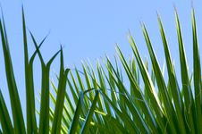 Free Green Palm Leaf Stock Photos - 10337223