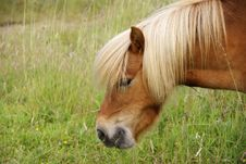 Free Pony Head 6 Stock Images - 10337344