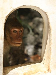 Free Monkey Looking Through The Window Stock Image - 10337581