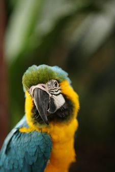 A Close-up Shot Of Parrot Stock Images