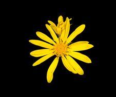 Free Yellow Flower 4 Stock Photo - 10338220