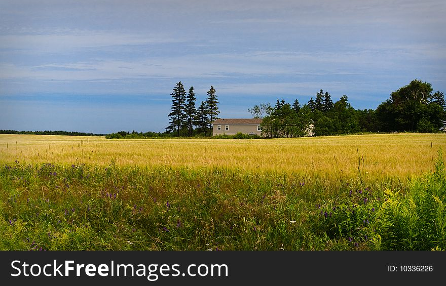 The house in yellow field