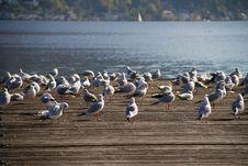 Free Bird, Seabird, Water, Fauna Royalty Free Stock Photos - 103340688