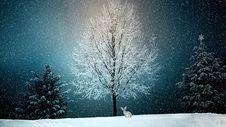 Free Winter, Snow, Nature, Tree Stock Photo - 103341630