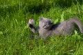 Free Little Kitten Stock Image - 10345101
