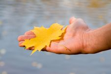 Free Maple Leaf In A Hand Stock Photos - 10340673