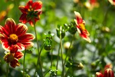 Free Red Flower Stock Photography - 10342182