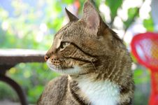Free Favourite House Cat Stock Image - 10343001