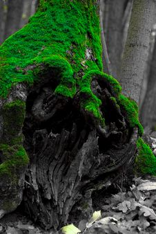 Free Mossy Stump Royalty Free Stock Photography - 10343857