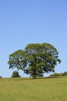 Free Tree In A Field Royalty Free Stock Image - 10343956