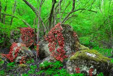 Free Red Leaves Twining Round The Stone Royalty Free Stock Photo - 10344195