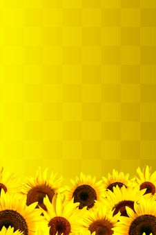 Free Yellow Sunflowers Petals Background Royalty Free Stock Image - 10344216