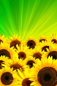 Free Yellow Sunflowers Petals Background Stock Photography - 10344392