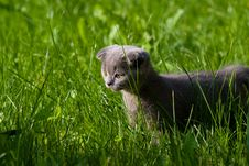 Free Little Kitten Stock Photo - 10344980