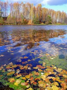 Free Mellow Autumn Royalty Free Stock Photography - 10344987