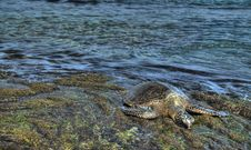 Sea Turtle In HDR Stock Images