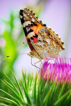 Beautifu Moth Stock Photos