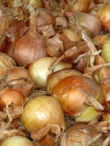Raw Onion Stock Image
