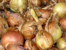 Free Raw Onion Royalty Free Stock Photo - 10347285
