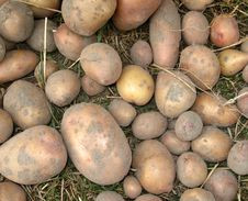 Free Raw Fresh Potatoes Royalty Free Stock Images - 10347539