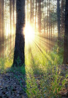 Free Sunset In Forest Stock Image - 10347581