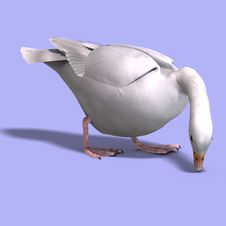 Free Snow Goose Stock Photos - 10348003