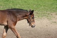 Free Foal 8 Stock Photography - 10348772