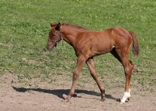 Free Foal 9 Stock Image - 10348781