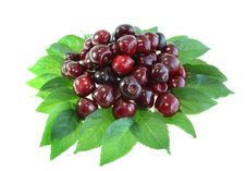 Free Sweet Cherry Royalty Free Stock Photo - 10349575
