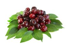 Free Sweet Cherry Stock Photo - 10349590