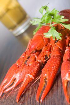 Free Crayfish And Beer Stock Photos - 10349623